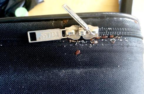 FRYS NED: Både om du frykter å ha fått med deg veggedyr eller kakerlakker hjem fra ferie, er rådet å fryse ned kofferten i noen dager. Foto: DOGPOINT