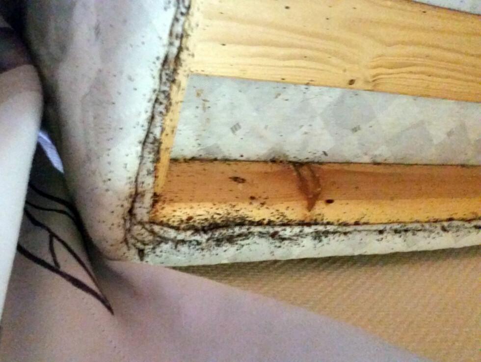 SJEKK UNDER SENGEN: Du bør ta en titt oppunder senga når du sjekker inn. Svarte prikker som dette er ekskrementer fra veggedyr. Foto: TOR ILJAR/DOGPOINT