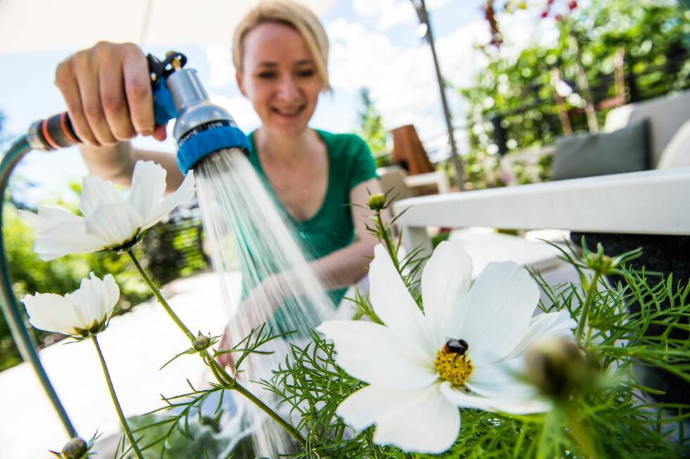 VANN NOK NÅR DU VANNER: Hageentusiast Anne Havåg Holter-Hovind bak hagebloggen Moseplassen.no sier til Dinside at hun alltid setter ut en plastboks når hun vanner. Dette er for å være sikker på at hun gir plantene «en skikkelig rotbløyte». Se alle vanningstipsene i videoen nedenfor. Der kan du ogsåp se flere andre tips til smart vanningsverktøy.  Foto: ENDRE VELLENE