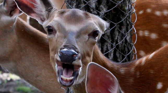 image: Dette er verdens beste potensielle kjæledyr