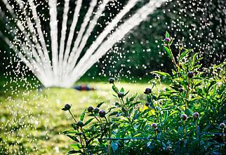 Automatisk vanning bør ikke brukes overalt