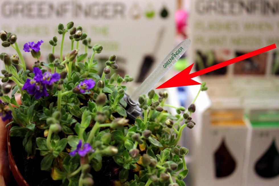 SMART HAGESTELL: Hva med en sensor som sier ifra når blomsten begynner å bli tørst og trenger vann? Vanningen må du imidlertid ta deg av selv, men den signaliserer med å blinke når blomsten er tørst. Foto: KRISTIN SØRDAL