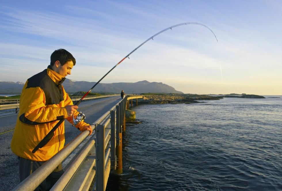 NATUROPPLEVELSER: Langs Atlanterhavsveien er det store muligheter for både fiske og utflukter.  Foto: SAMFOTO