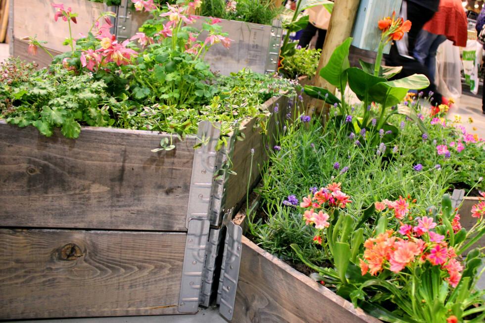 PALLEKARM: Det meste kan plantes i pallekarm, men pass på at du får god og nok jord - og at du har gjort skikkelig grunnarbeide mot bakken! Foto: KRISTIN SØRDAL