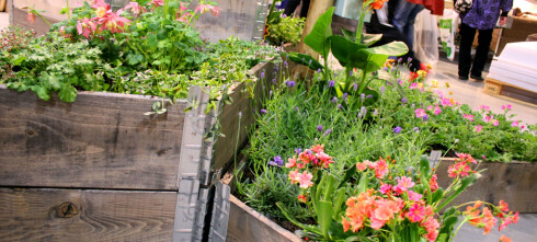 Hvordan plante i pallekarm