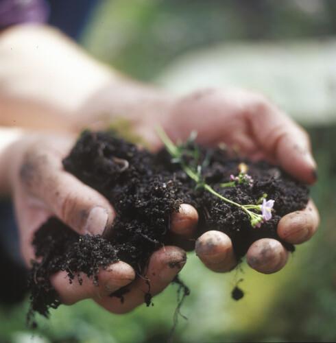 FORSKJELL PÅ JORD: Det spiller faktisk en rolle hva slags jord du planter i. Foto: BILDHUSET / SCANPIX