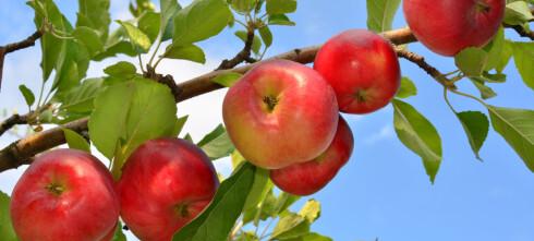 Hvordan plante frukttrær og bærbusker