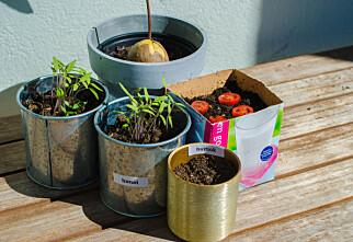 Tre grønnsaksplanter som er lette å dyrke
