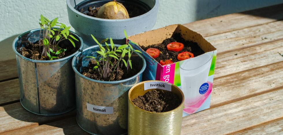 image: Tre grønnsaksplanter som er lette å dyrke