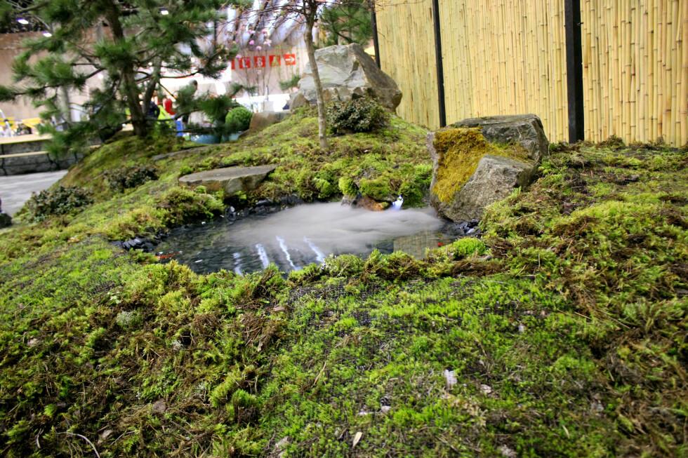DER INGENTING ANNET VIL VOKSE: Hole Hagesenter viste frem denne varianten av mose som dekke, på Hagemessen. Dette er Norsk skogbunnsmose, som godt kan tåle uttørking. Foto: KRISTIN SØRDAL