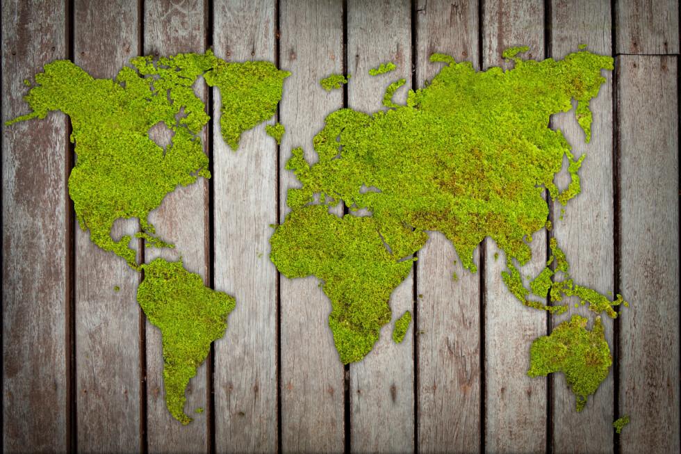 MOSEKUNST: Du kan lage kule bilder av mose, på kjedelige flater i hagen din. Bland mose, surmelk, vann og sukker - og mal i vei! Foto: PHLOXII/SHUTTERSTOCK/NTB SCANPIX