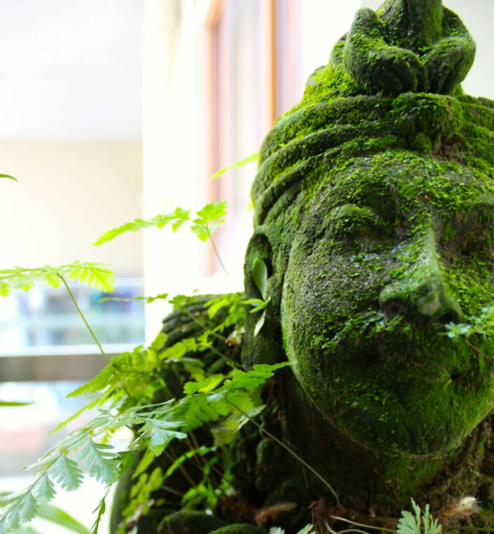 MOSEMALING PÅ GJENSTANDER? Gjenstander eller andre ting i hagen kan få et mer spennende uttrykk med litt mosemaling. Her har bloggeren Militza Maury brukt det på en hagestatue.  Foto: MILITZA MAURY/LITTLE GREEN DOT