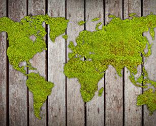 image: Mose i hagen? Her er tre kule ting du kan bruke mosen til!