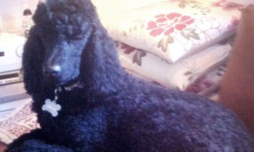 image: Er hunden din «ødelagt»?Du kan klage!
