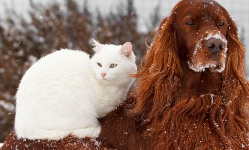 image: Sjekk når det er for kaldt for kjæledyrene dine