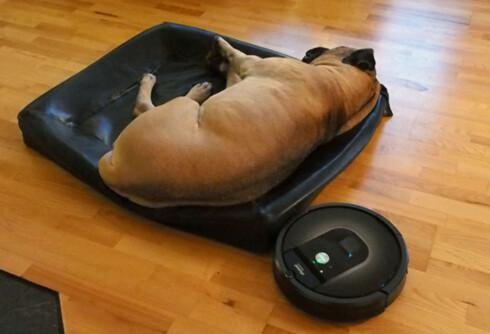 Roombaen går tett innpå alt av hjørner og hindringer, for så å manøvrere seg rundt. I løpet av vår testperiode har vi heller ikke opplevd at den har kjørt seg fast. Foto: ØYVIND PAULSEN
