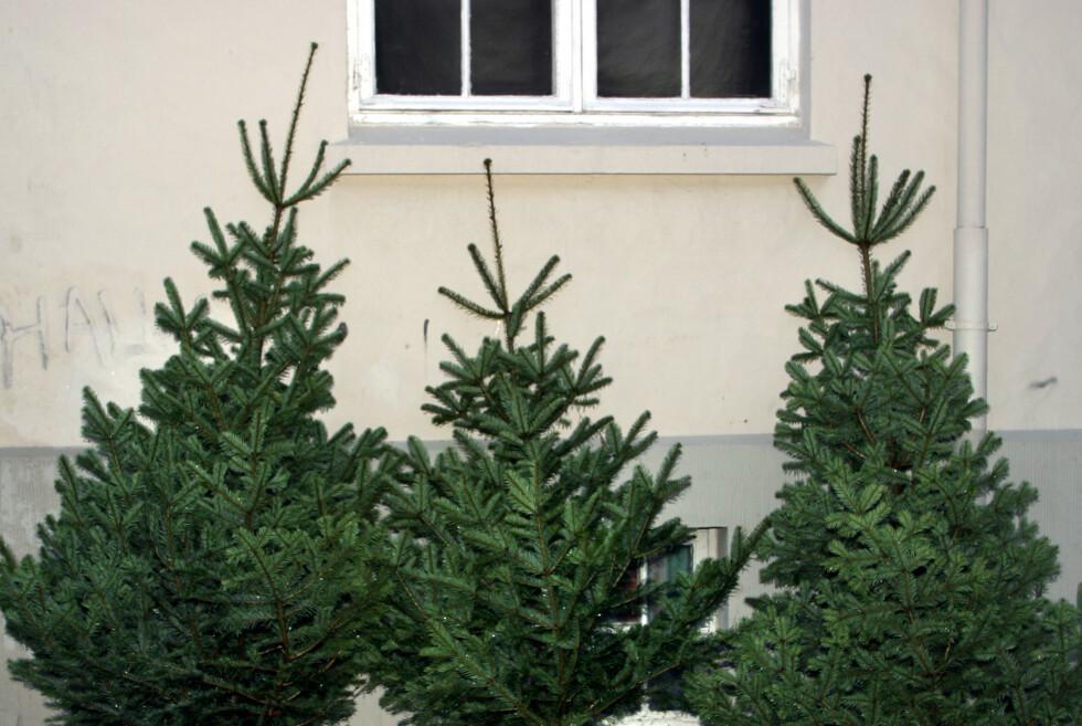 <strong><B>HENTES:</strong></b> I noen kommuner slipper du å frakte juletreet selv. Foto: NTB SCANPIX