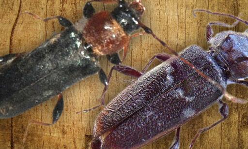 image: Hvilken av disse er et skadedyr?