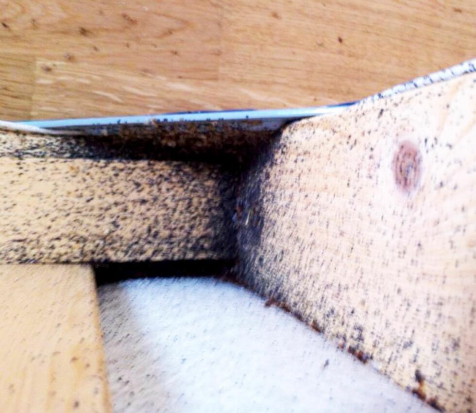 INVASJON: Denne sengen er grundig infisert av veggedyr. Foto: DOGPOINT