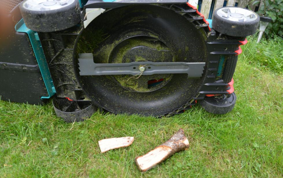 <strong><B>KRAFTIG OG SKARP:</strong> </B> Den roterende kniven klipper også små vedkubber, hvis de har gjemt seg i plenen. Foto: BRYNJULF BLIX