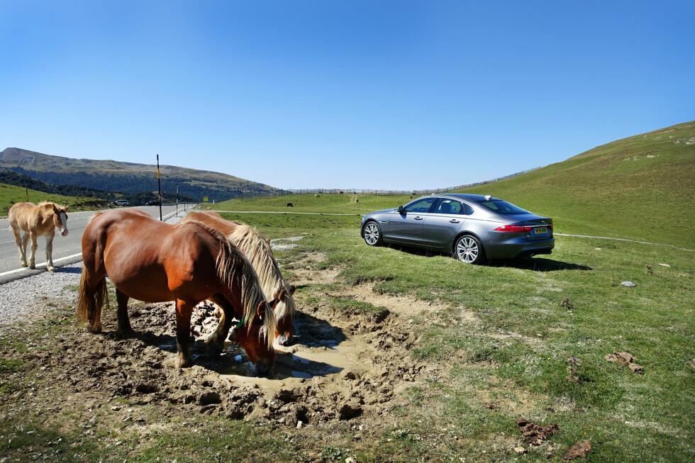 MANER TIL KAMP: Nye Jaguar XF er varmblodig og klar for å gi de sterke, tyske konkurrentene kamp på oppløpet.  Foto: ESPEN STENSRUD