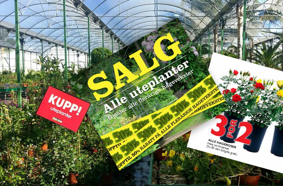 BILLIG OG BRA Å PLANTE NÅ: Det er veldig bra å plante i august og september - og med halv pris kan du plante dobbelt så mye for samme budsjett. Foto: NTB SCANPIX/KRISTIN SØRDAL
