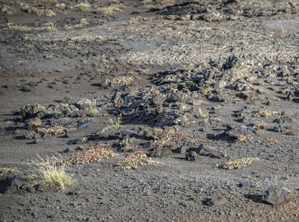 GROVT TERRENG: Knivskarpe steiner på størrelsen med neven kjørte vi på i opptil 70 km/t uten problemer ... Foto: Jamieson Pothecary