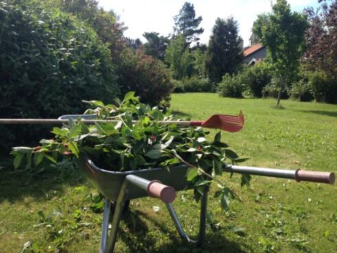 HAGEARBEID: Kjøper du bolig med stor hage, følger det med hagearbeid på kjøpet. Er du usikker på om du liker hagearbeid, kjøp bolig med hageflekk ... Foto: BERIT B. NJARGA