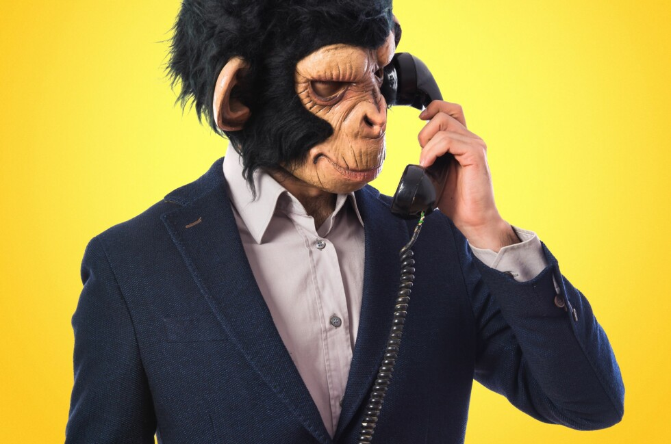 SOM APEKATTER: Snakker du høyt i telefonen, kan det være av samme grunn som apekatter roper høyere i bråkete flokker. Vi bare nevner det. Foto: LUIS MOLINERO / NTB SCANPIX