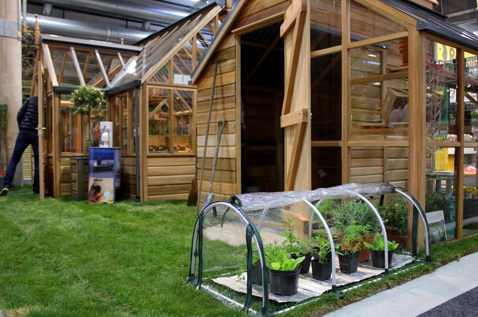 SMÅTT OG SMART: Minidrivhus med varmematte gjør at du kan gro ute hele året - som er mye mindre plasskrevende og koster mye mindre penger enn for et drivhus i full størrelse. Foto: KRISTIN SØRDAL