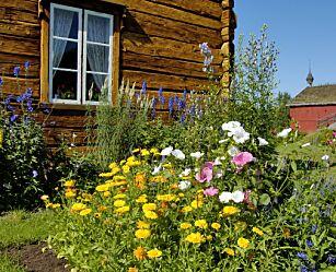 image: Når er det for sent å plante ut blomster?
