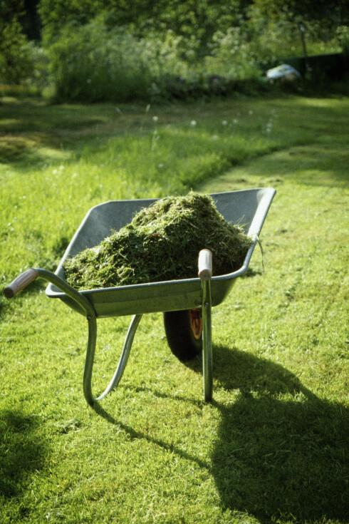SAMLE OPP? Klipper du ofte, trenger du ikke samle opp gresset etter klipping, og det skal også hjelpe mot tilvekst av mose. Foto: BILDHUSET/NTB SCANPIX