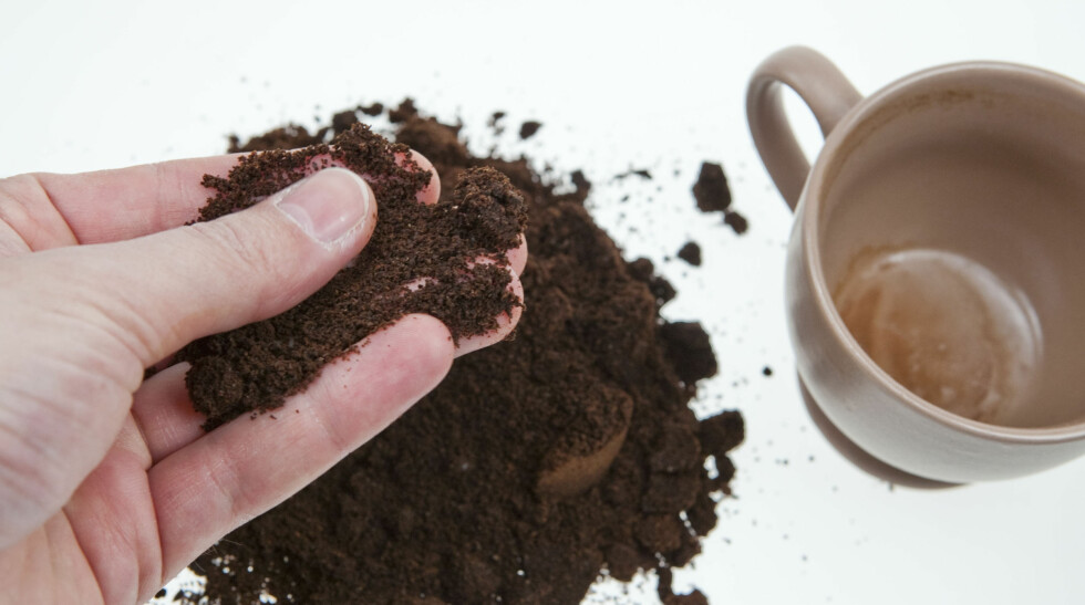 KAFFEGRUT I BEDET: Kaffegrut skal holde kattene borte, og skal i tillegg kunne holde sneglene på avstand.  Foto: PER ERVLAND