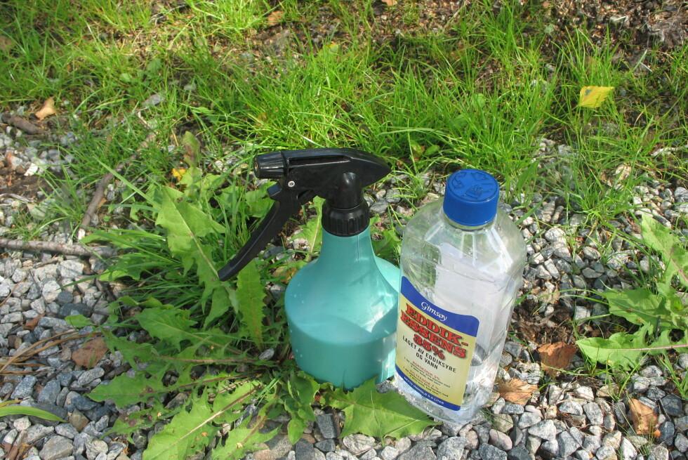 FUNKER SOM BARE RAKKER'N: En blanding vann og eddik er supert og billig ugressmiddel.  Foto: KRISTIN SØRDAL