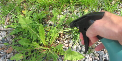 image: Slik blir du kvitt ugress, maur og katter i hagen