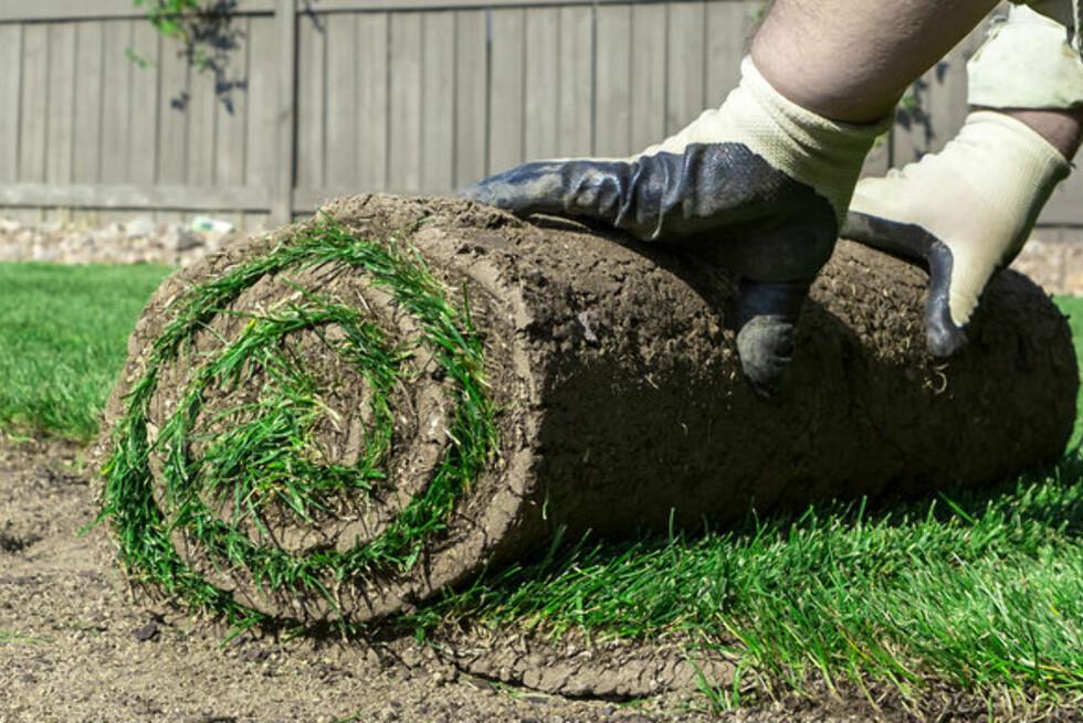 RULL DEN UT: Du sparer et par år på å kjøpe ferdigplen på rull. Foto: ADAMSRØD FERDIGPLEN