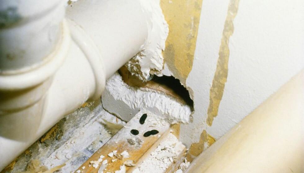 ROTTESKADER: Skadedyr kan forårsake store skader på huset. Bildet viser skader etter rotter. Foto: ANTICIMEX/LENNART FALK