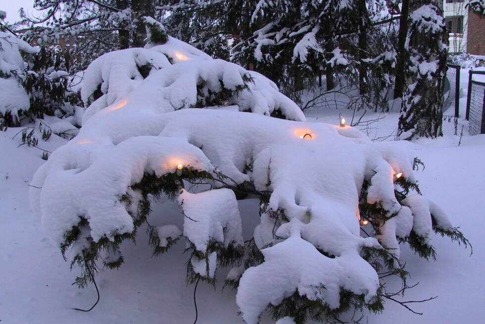 SPESIALUTSTYR: Kabling og lys skal være laget for å bli helt nedsnødd og vel så det. Foto: BRYNJULF BLIX