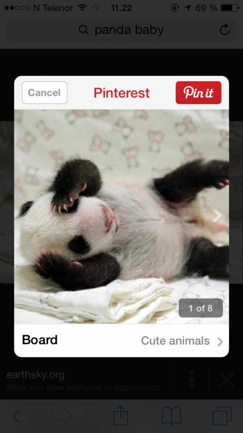 APPENE SNAKKER SAMMEN: Har du Pinterest installert på din iPhone, kan du nå pinne bilder rett fra Safaris delingsmeny. Foto: KIRSTI ØSTVANG