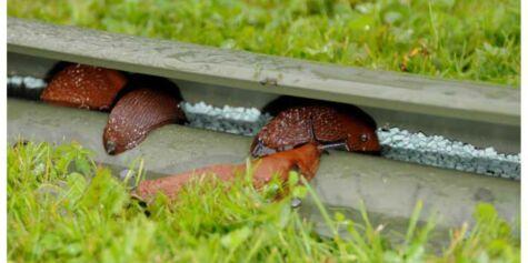 image: Snailrail - nytt norsk sneglegjerde