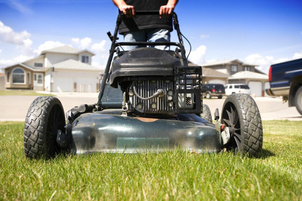 HVILKEN? Er du litt treg med å klippe gresset, bør du velge en gressklipper med oppsamler, eller kanskje en robotklipper?  Foto: ALL OVER PRESS