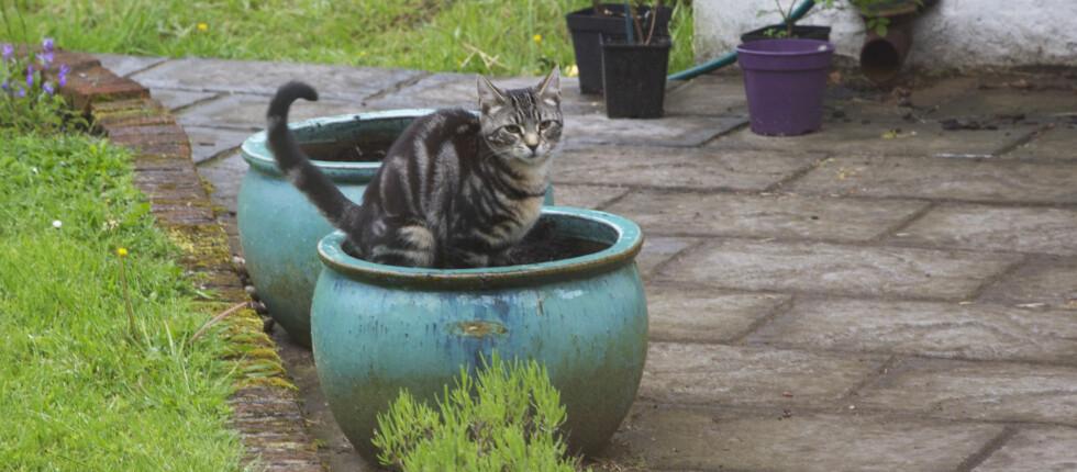 KATTEDO? Sliter du med katter som gjør fra seg i hagen, finnes det rimelige og smarte råd. Foto: ALL OVER PRESS