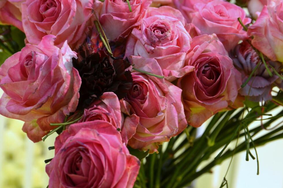 <strong><b>FINE OG KREVENDE:</strong></b> Roser er vakre, men krever godt stell for å vare lenge. Foto: MARTHE EVENSEN