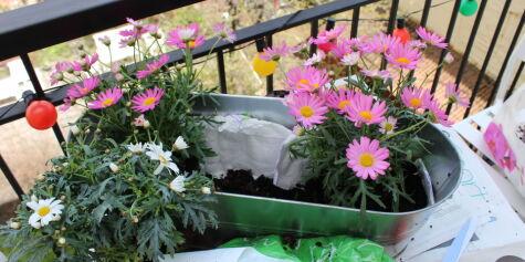 image: Planter til balkongen