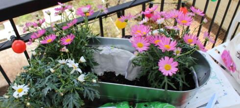 Planter til balkongen