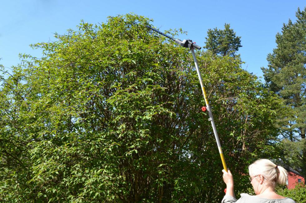 LANG REKKEVIDDE: Når du skal klippe høye busker og trær nytter det ikke med vanlig hekksaks. Vi har testet lange varianter. Foto: BRYNJULF BLIX