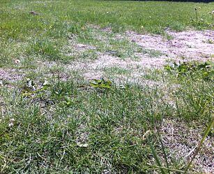 image: Slik får du fin gressplen