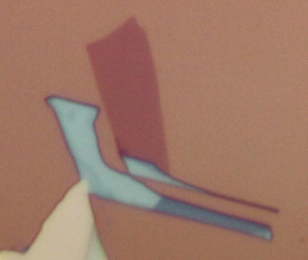 Et nærbilde av et enkeltlag av halvledermaterialet wolframselenid. Kontrasten fra laget mot bakgrunnen viser hvor sterkt disse materialene interagerer med lys.  Foto: University of Washington