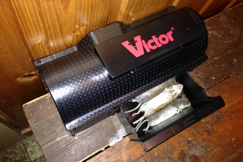 3-0. Det er Victor(y) i praksis.  Foto: ØYVIND PAULSEN