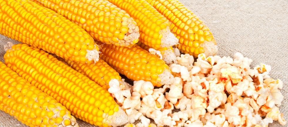 Genmodifisert mais har funnet veien til norske forbukere, i form av upoppet popcorn fra leverandøren TRS.  Foto: Colourbox